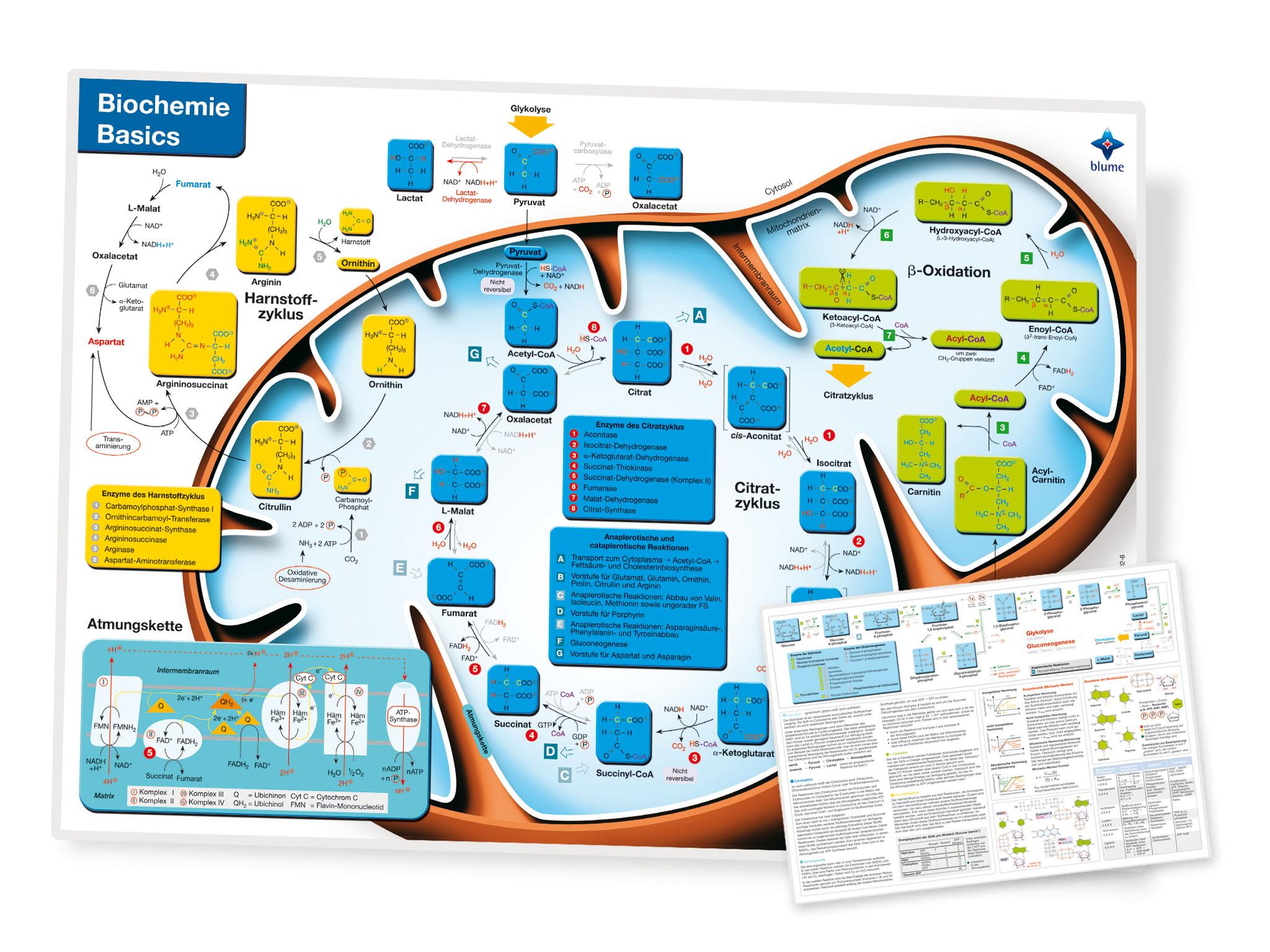 Biochemie Basic Lerntafel