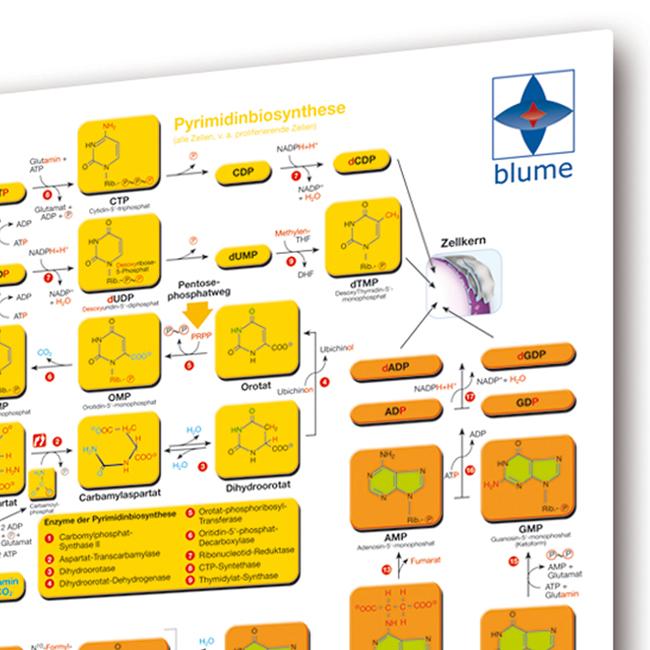 Biochemie Basics II - Poster DINA1